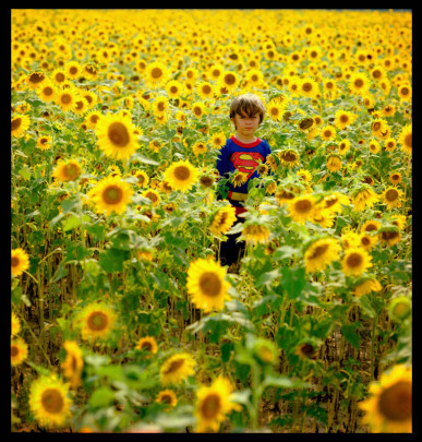 Superman in Sunflowers